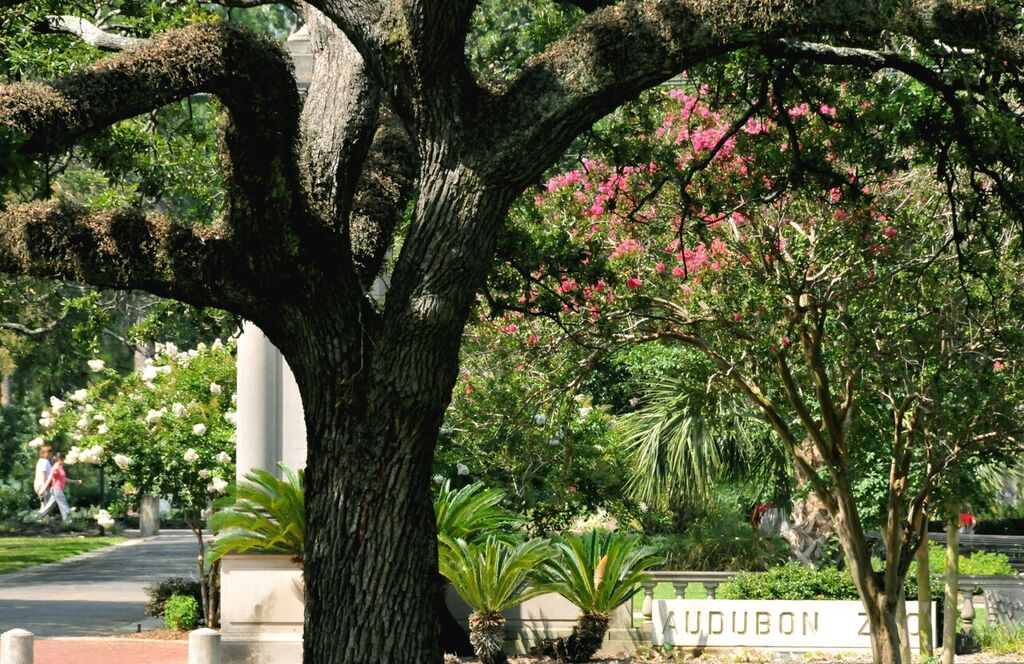 A view of Audubon Park from Tulane's campus