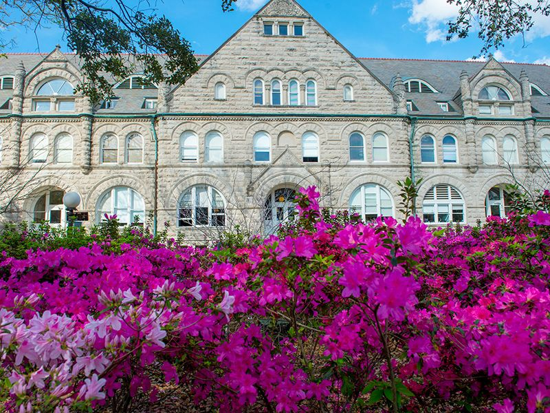 Azaleas bloom in front of Gibson Hall