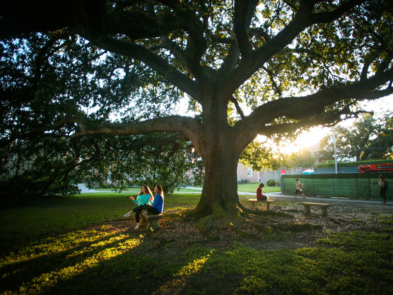 Sunlight streams through branches of an oak tree on campus