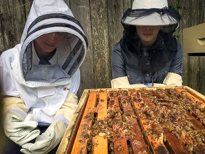 Sofia Horowitz, left, and Ashleigh Nave, right, members of the Tulane Beekeeping Club, regularly monitor the health of the bees.