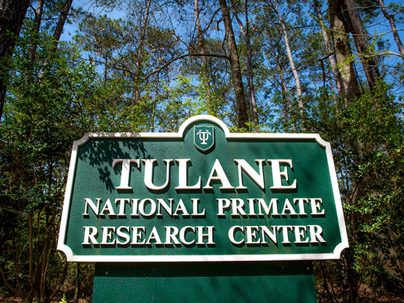 For 15 years, students enrolled in summer fellowships at the Tulane National Primate Research Center have gained first-hand experience in scientific research and veterinary medicine.