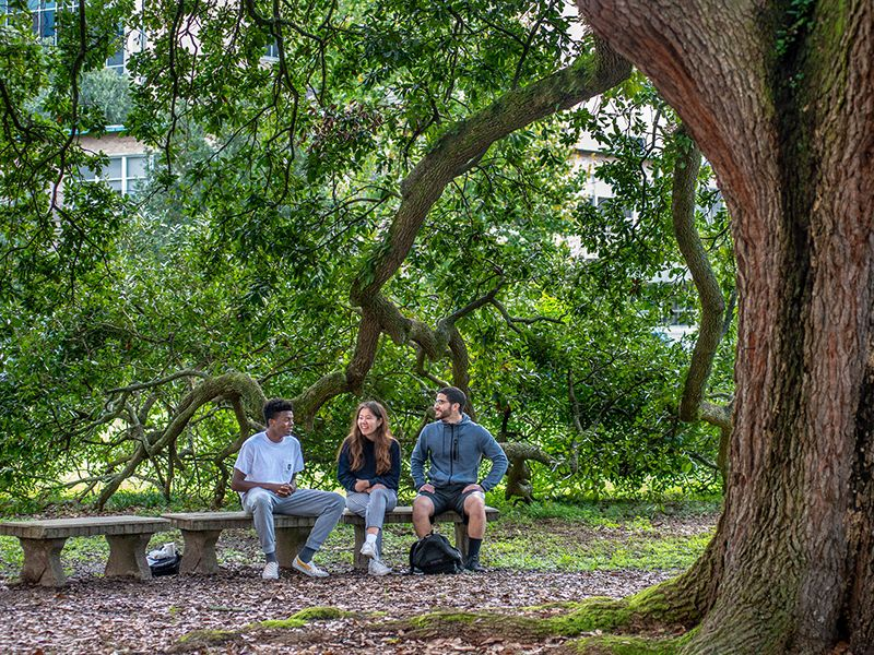 Students chat under oak trees